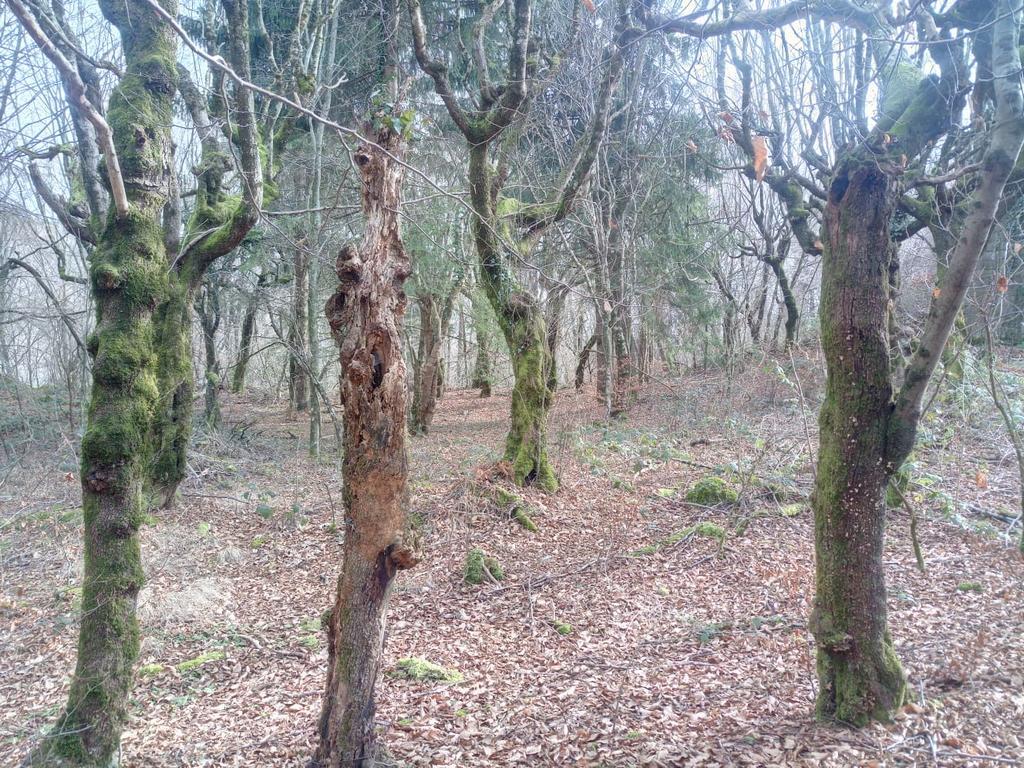 bosco-vetusto-cansiglio