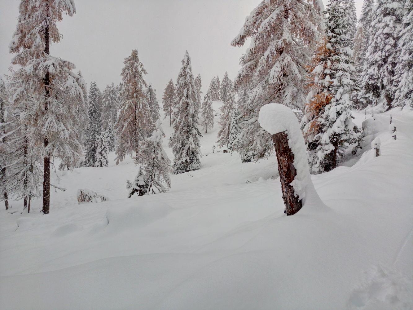 Larici-neve
